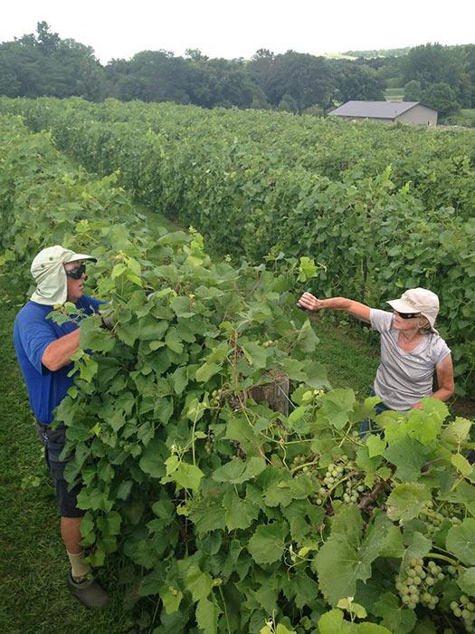old-mans-creek-winery-vineyard-gallery-iowa-3