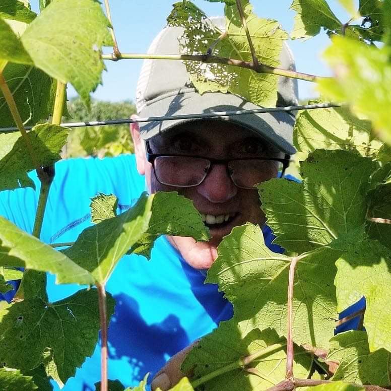 old-mans-creek-winery-vineyard-gallery-iowa-grapes